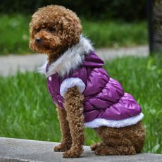 Mantel für Hunde mit abnehmbarer Kapuze, 2 Pfoten - Lila, S