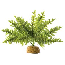 Exo Terra Pflanze für Terrarium  - Boston Fern Small, 20cm