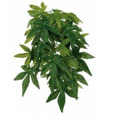 Aquarienpflanze Abutilon - hängend 20 x 50 cm