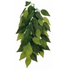 Aquarienpflanze FIKUS - hängende 20 x 30 cm