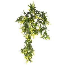 Terrarienpflanze Croton, 30 cm