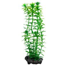 Egeria densa (Anacharis) - Pflanze Tetra 23 cm, M
