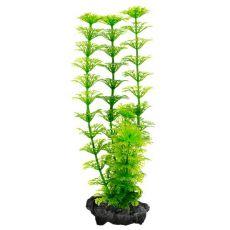 Limnophila sessiliflora ( Ambulia) - Pflanze Tetra 30 cm