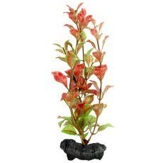 Ludwigia repens ( Red Ludwigia) - Pflanze Tetra 15 cm, S