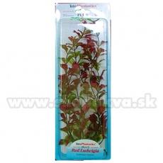 Ludwigia repens ( Red Ludwigia) - Pflanze Tetra 38 cm, XL