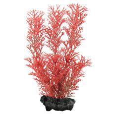 Myriophyllum heterophyllum (Red Foxtail) - Pflanze Tetra 15 cm, S