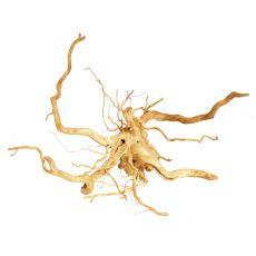 Aquarium Wurzel Cuckoo Root - 46 x 46 x 17 cm