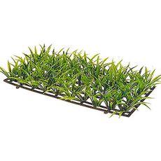 Sagitaria Platyphylla - Pflanze Hobby, Größe 5 cm