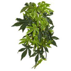 Abutilon Silk Medium - Terrarienpflanze