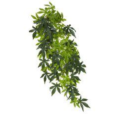 Abutilon Silk Large - Terrarienpflanze