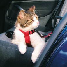 Geschirr für Katzen ins Auto, Sicherheits - 20 - 50 cm