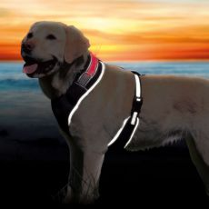 Hundegeschirr mit Leuchtband L, 60-80cm