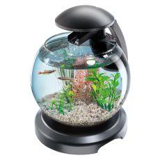 Aquariumkugel für Kampffisch oder Karausche - 6,8 L