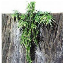 Pflanze für Terrarium TerraPlanta Madagaskar Bambus - 50 cm