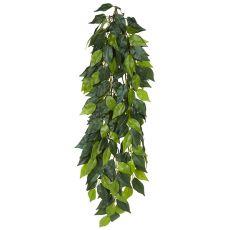 Ficus silk large - hängende Terrarienpflanze, 70cm